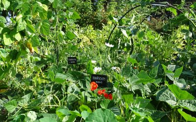 Que pouvez-vous (re)planter en été pour prolonger votre saison au potager?