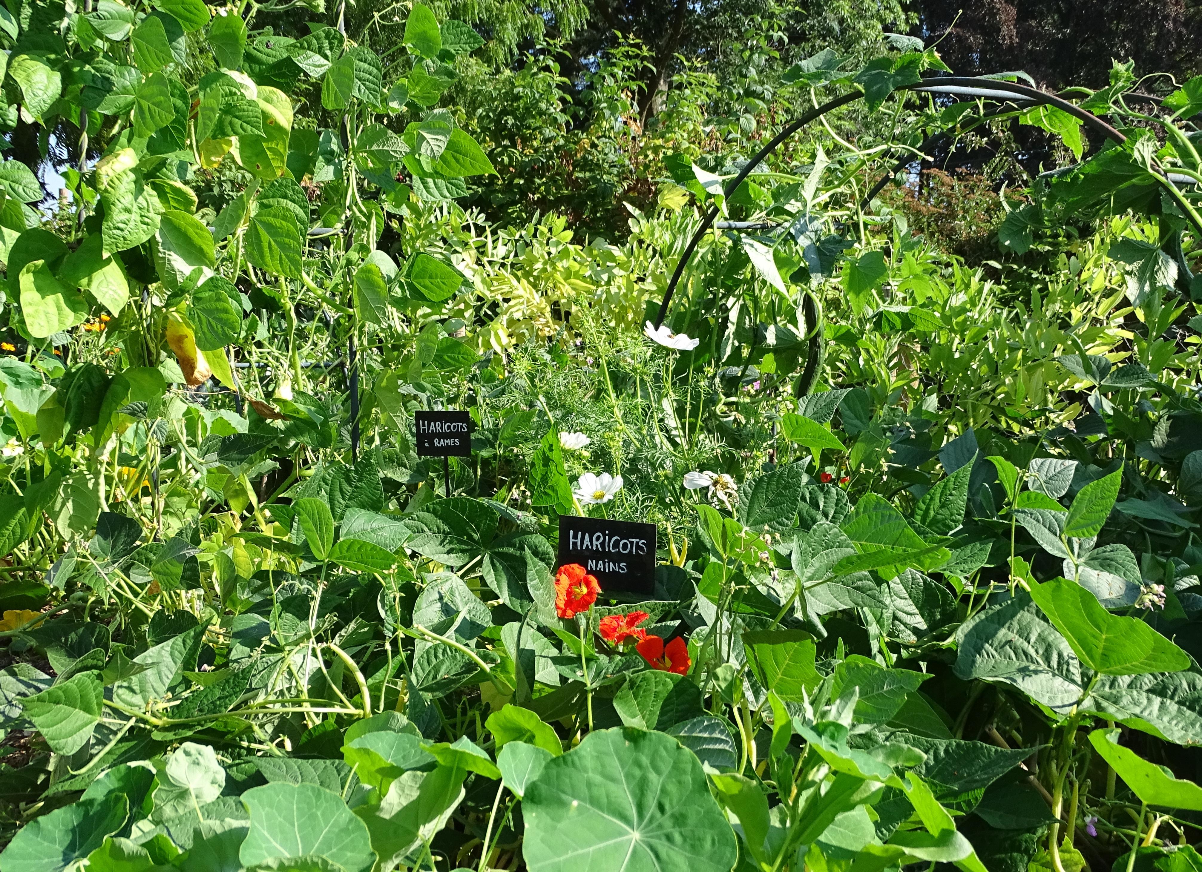 Un Petit Potager Productif que pouvez-vous planter en été pour prolonger votre saison